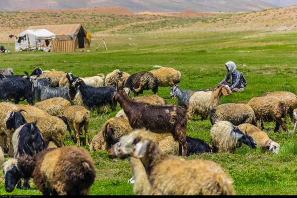 ایرانگردی - عشایر قشقایی، فارس
