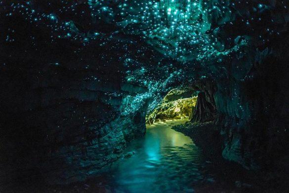 غار کرمهای شب تاب نیوزلند
